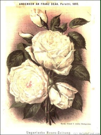 La vera rosa perotti